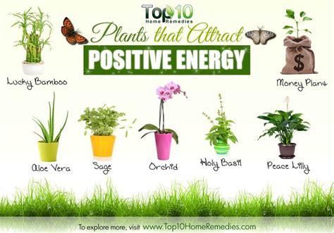 Fung Shui Organic Home Garden Pinterest | plants for positive energy positive energy pinterest