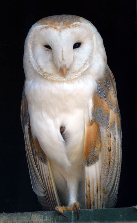 Standing Notes Owl 190 best only the birds can eat my images on beautiful birds birds of prey