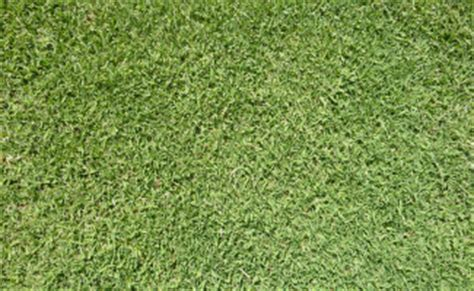 anna couch roll out lawn adelaide 4 types of instant turfs to choose