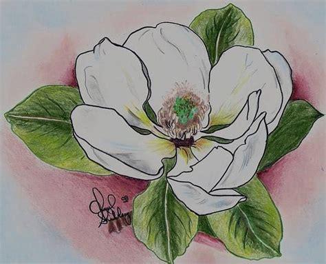 magnolia tattoo artists org magnolia drawing by cheryl shibley
