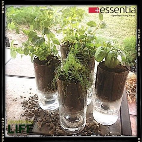 Plastic Bottle Self Watering Planter by 17 Best Images About Plastic Bottle For Plants On