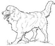 mountain dog coloring page coloriage chien de saint hubert coloriages 224 imprimer