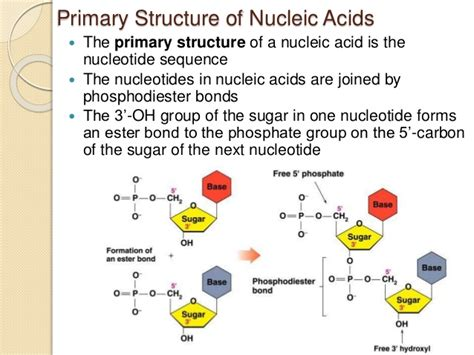 protein nucleic acid nucleic acids and protein synthesis