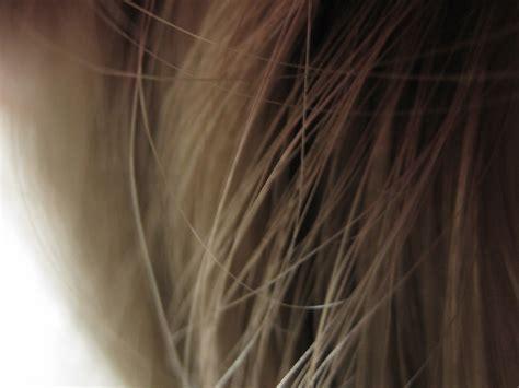 image hair light hair texture free stock photo domain