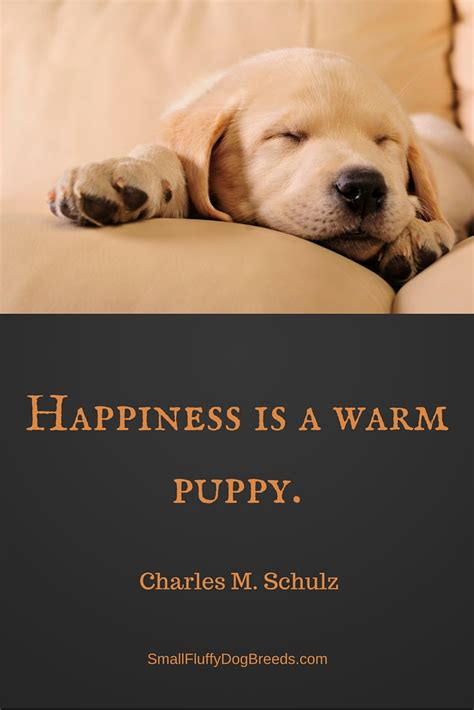 happiness is a warm puppy quotes about dogs great quotes about s best friend