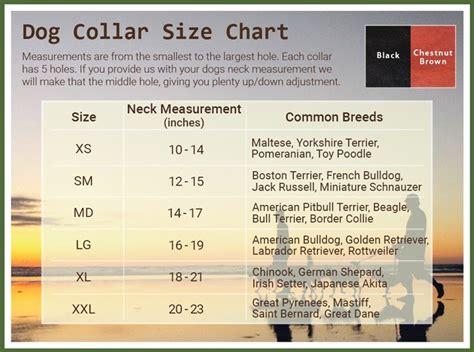 puppy size chart pitbull terrier size chart photo