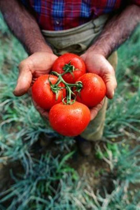 all bug spray for vegetable garden the world s catalog of ideas