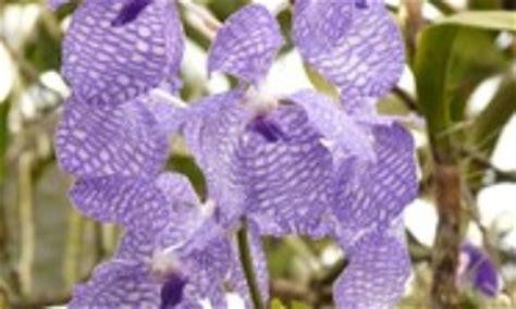 Orchideen Sch Dlinge Bek Mpfen 1467 by Orchideen Sch 228 Dlinge Bek 228 Mpfen Orchideen Sch Dlinge