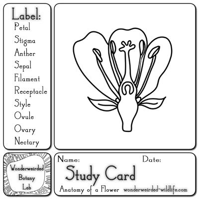 pattern variables merton parts of a flower worksheets worksheets for all download