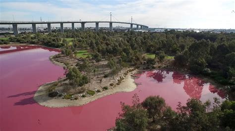 pink lake melbourne a lake turned pink in australia it s not the only one