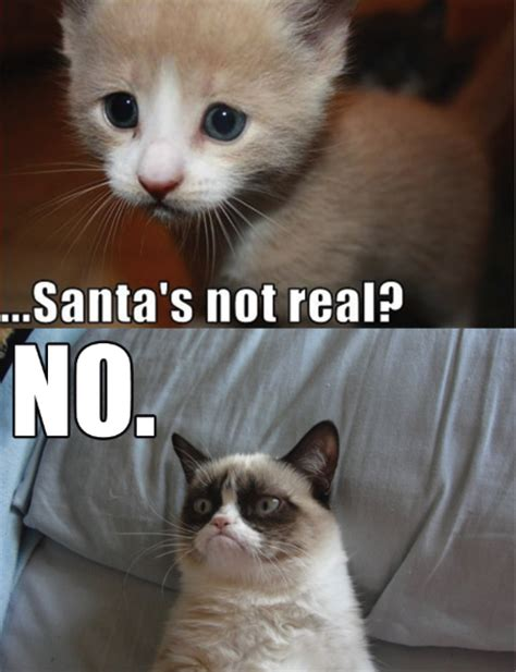 The Grumpy Cat Meme - grumpy cat part 1