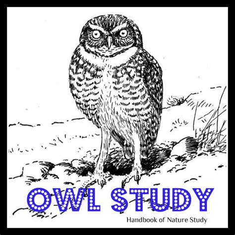 printable owl moon 90 best owl crafts activities for kids images on