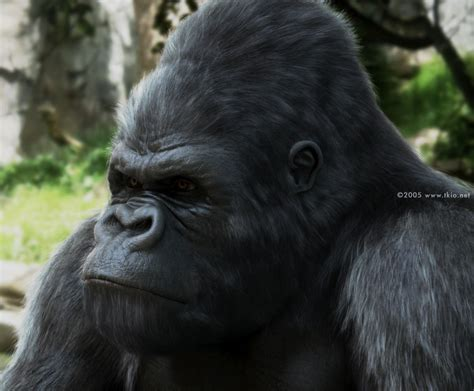 3d Genethics Kingkong 1000 images about gigantopithecus on