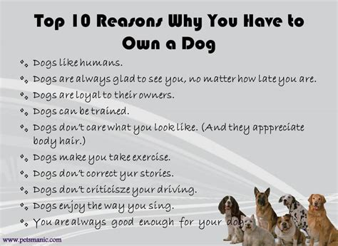 the best 10 reasons why you re the best fill in the blank gift books top 10 reasons why you to own a dog pets manic