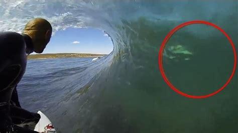 nautique boats perth le surfeur kelly slater fr 244 le un requin blanc