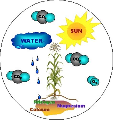 what of light do plants need globe carbon cycle