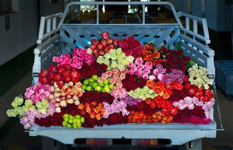 bisnis tanaman hias   menguntungkan bibit