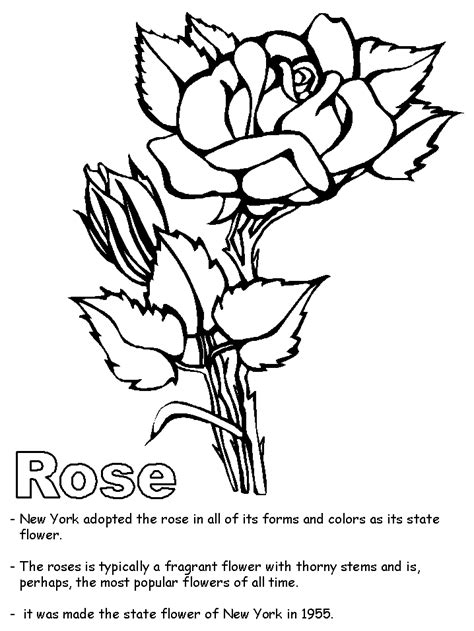 top 10 rose coloring pages that are beyond beautiful