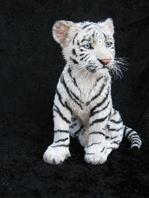 baby white tiger cubs pet a baby white tiger list