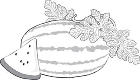 watermelon plant coloring page watermelon clip art images watermelon stock photos