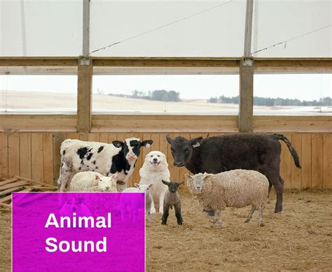 animal sound  mp  mingo sounds
