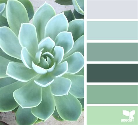design seeds instagram succulent tones design seeds