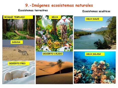 Imagenes De Ecosistemas Naturales | tema 6 los ecosistemas