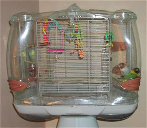 african lovebirds cages