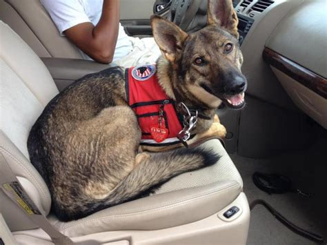 best dogs to as service dogs service dogs more than just s best friend