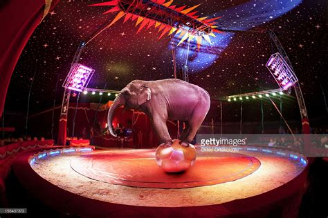 Pictures Of Circus circus elephant stock photo getty images