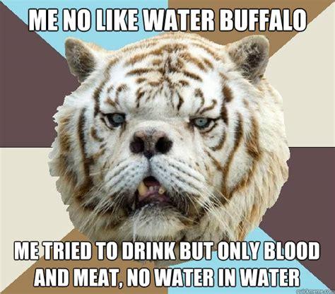 Funny Tiger Memes - me no like water buffalo funny tiger meme