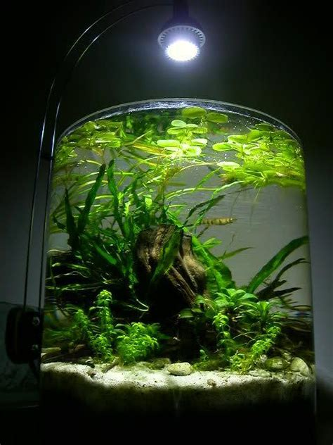 shrimp tank aquascape shrimp jar aquarium google search aquascape