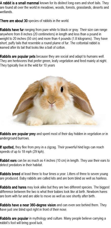 7 Facts On Bunny Rabbits by Rabbit Facts And For On