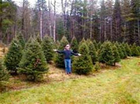 choose cut your christmas tree nh vt christmas tree