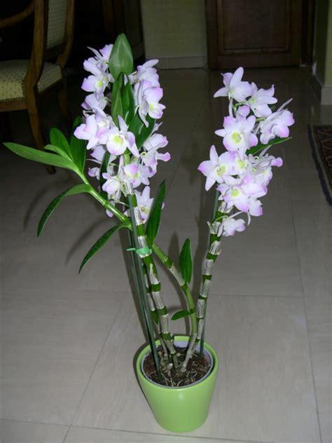 Wie Pflegt Orchideen Richtig 4793 by Orchideen Pflegen Und Reiche Sch 246 Ne Bl 252 Ten Zu Hause Bewundern