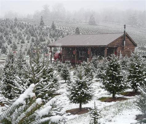 christmas tree farms upstate ny hudson valley resort spa warm memories on cold winter days tree farms upstate