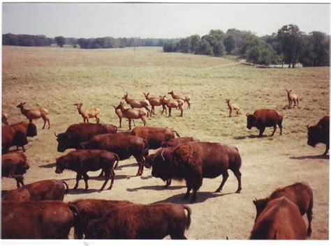 wildlife prairie state park hanna city il hours