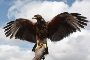 birds of prey tadcaster citizen the official tadcaster