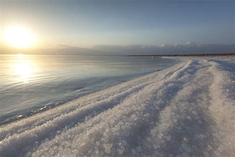 Large Sheds salt needed tolerance lessons from a dead sea fungus
