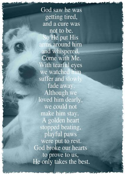 comforting words for loss of a pet 25 best ideas about loss of pet on pinterest dog loss