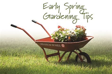 6 tips for april gardening geranium blog
