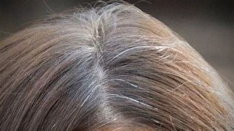 how to blend in gray roots of black hair with highlights today viewers reveal what they do about gray hair today com