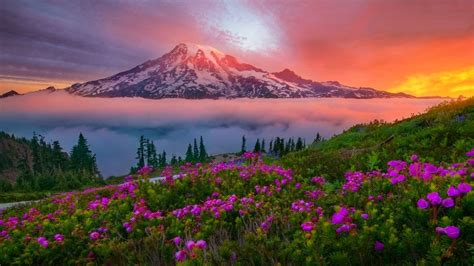 flowers   foggy mountains hd wallpaper background