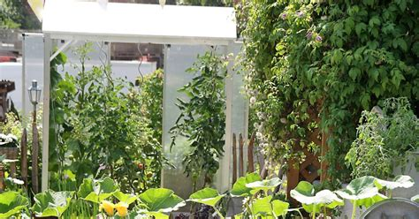 tomaten haus tomatenhaus selber bauen mein sch 246 ner garten