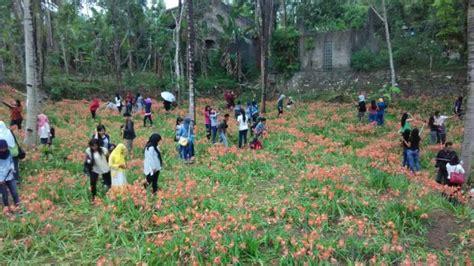 desain kebun bunga kecamatan pathuk dan ugm siap turun tangan desain kebun