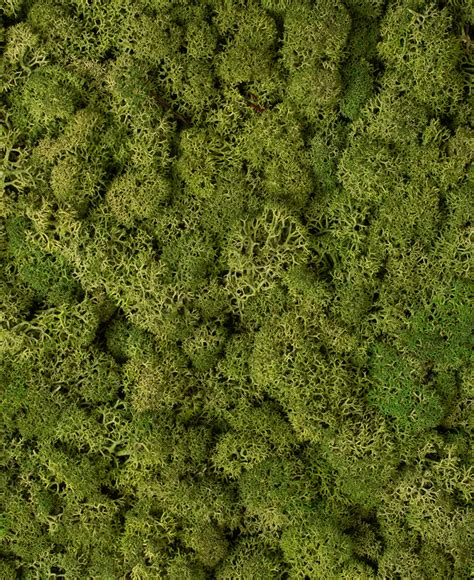 moss wall panel preserved moss  indoor decorative