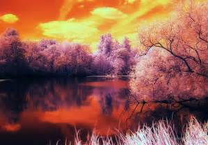 Marmalade Skies Quot Tangerine Trees And Marmalade Skies In The Sky With