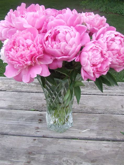 Pink Flowers In A Vase by Peony Flower Bloom Photos From June 2010