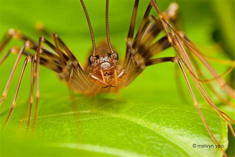 buy house centipedes japanese house centipede by melvynyeo on deviantart