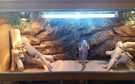 Home Decor Ideas For Cheap ideas for bearded dragon terrarium decor